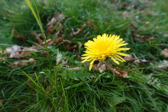 Dans mon jardin (fleur) Dsc00410