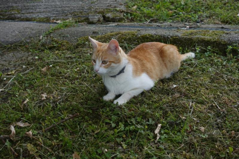Le chat en attaque (LOL) Dsc00610