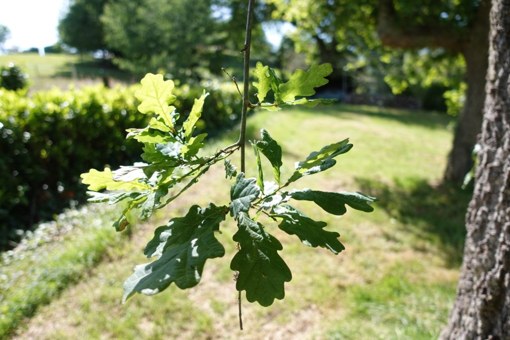 Feuille de l'arbre non corriger et corriger (avis et conseils) Dsc01211