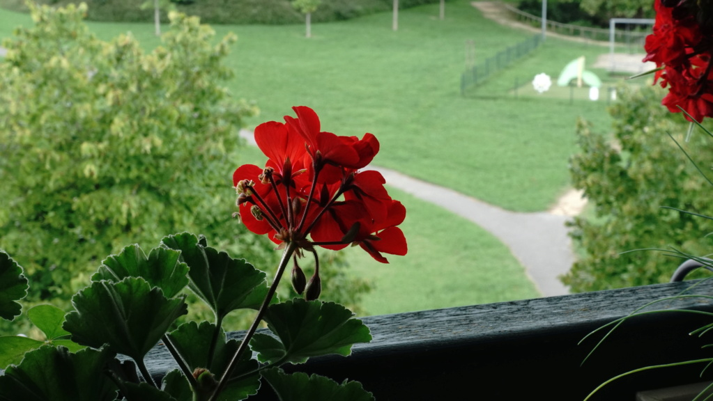 Fleur floue (?) Dsc02213