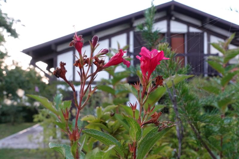 Fleur rouge (avis) Dsc09611
