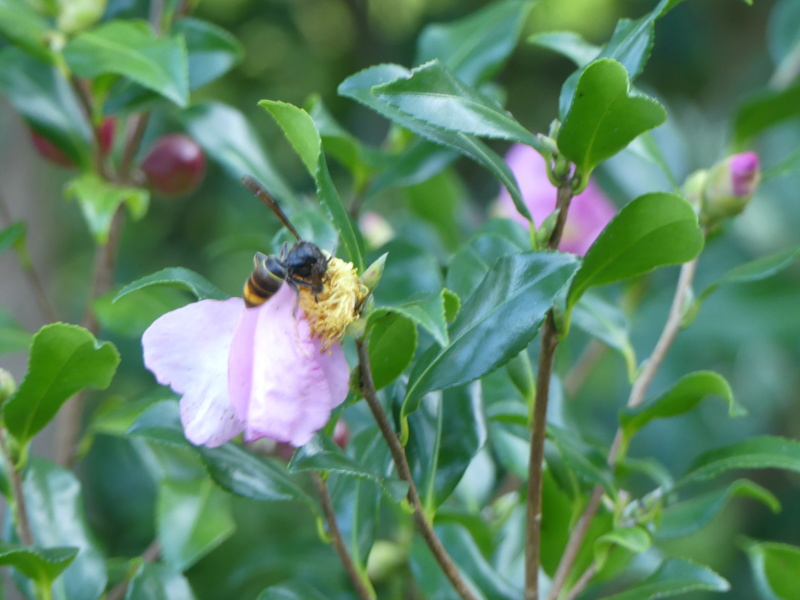 Fleur abeille (La photo est elle raté) ? Lumix_10