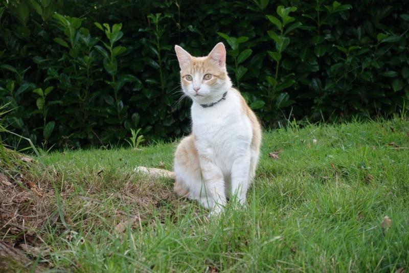 Mon chat (la meilleur photo de lui) non ? Mon_ch11