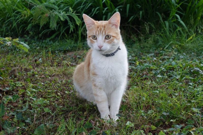 Le chat pose beaucoup mieux (non) ? Nouvea11