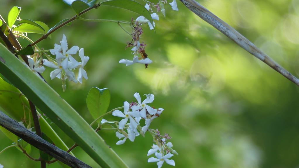 Est ce quel est floue encore ou pas ( Fleur ) FZ 300 P1100512