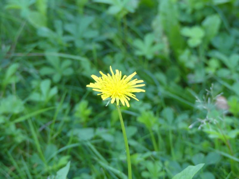 Fleur abeille (La photo est elle raté) ? P1130110