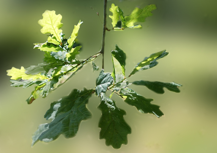 Feuille de l'arbre non corriger et corriger (avis et conseils) Pas_fl10