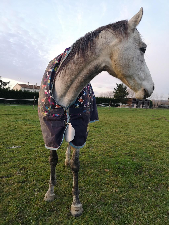 Colani (cheval)  Img_2012
