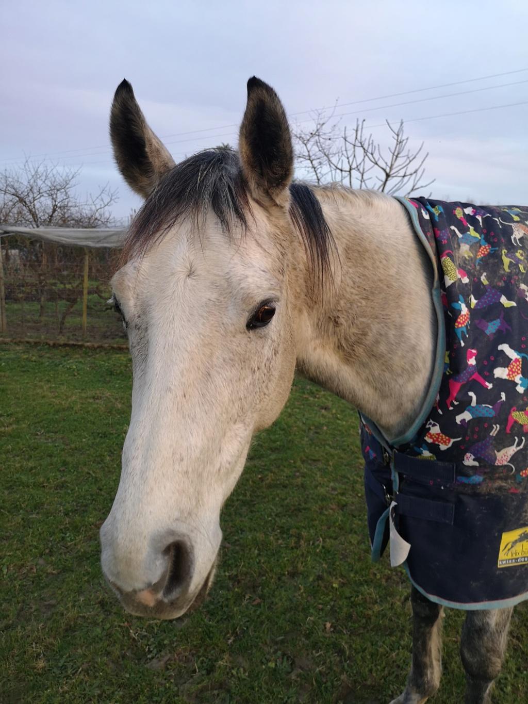 Colani (cheval)  Img_2013