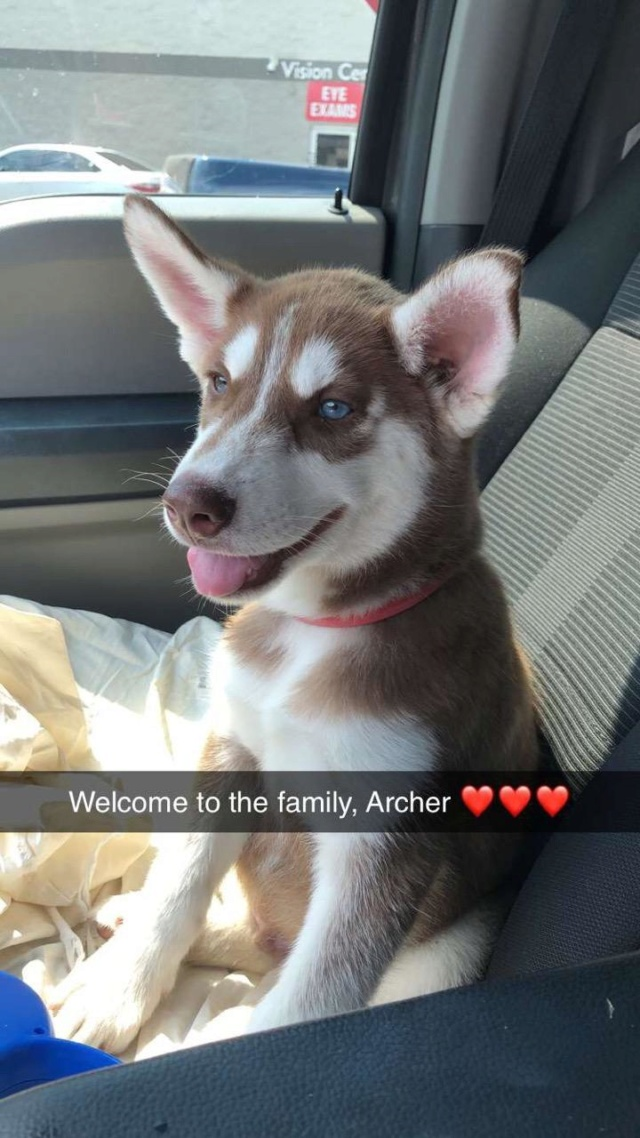 Hello! Meet Archer! Img95811