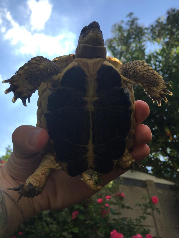 2 tortues à identifier SVP ^^ 64919610