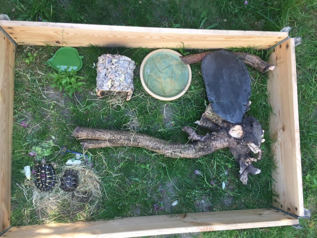 2 tortues à identifier SVP ^^ 64943511
