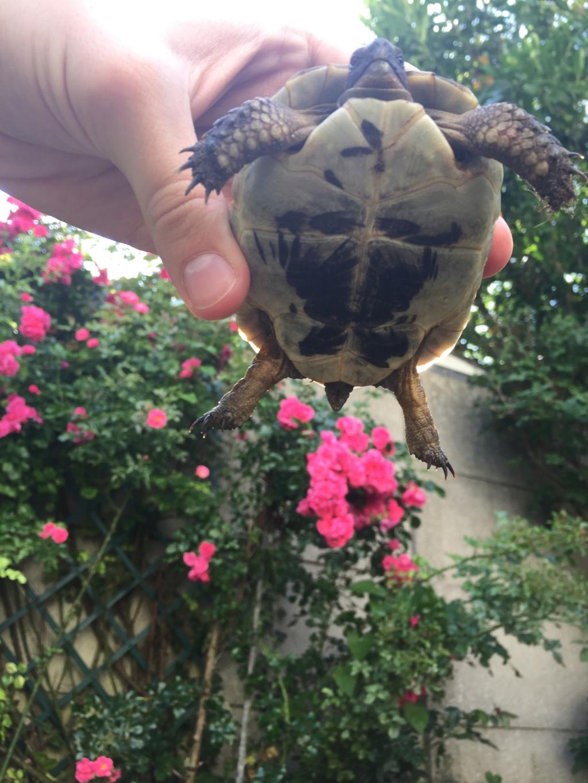 2 tortues à identifier SVP ^^ 65094211