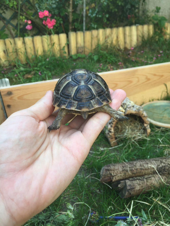 2 tortues à identifier SVP ^^ 65096311
