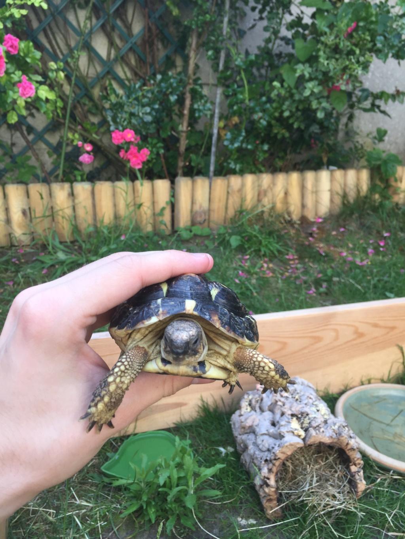 2 tortues à identifier SVP ^^ 65114710