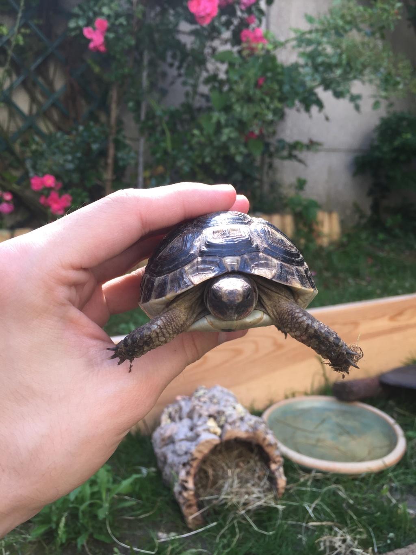 2 tortues à identifier SVP ^^ 65218711