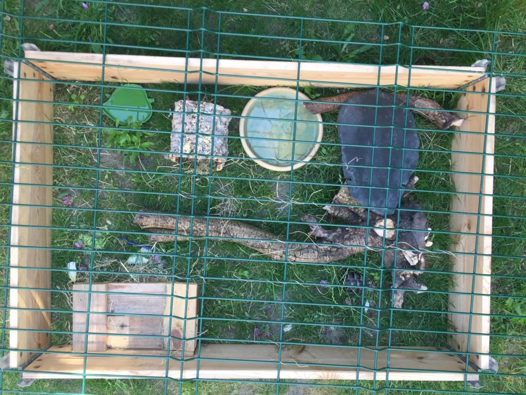 2 tortues à identifier SVP ^^ 65251111