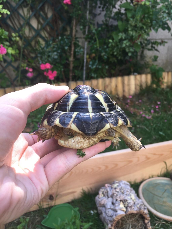 2 tortues à identifier SVP ^^ 65297610
