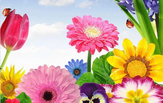 J'offre des fleurs  Captur14
