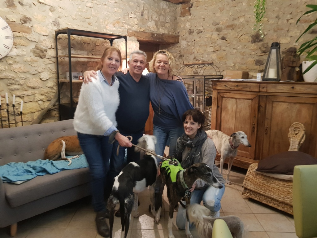 Kalesi, galga bringée de 5 ans Scooby France Adoptée  - Page 3 20191134