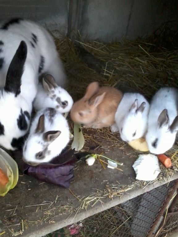 Mes lapins 2020-010