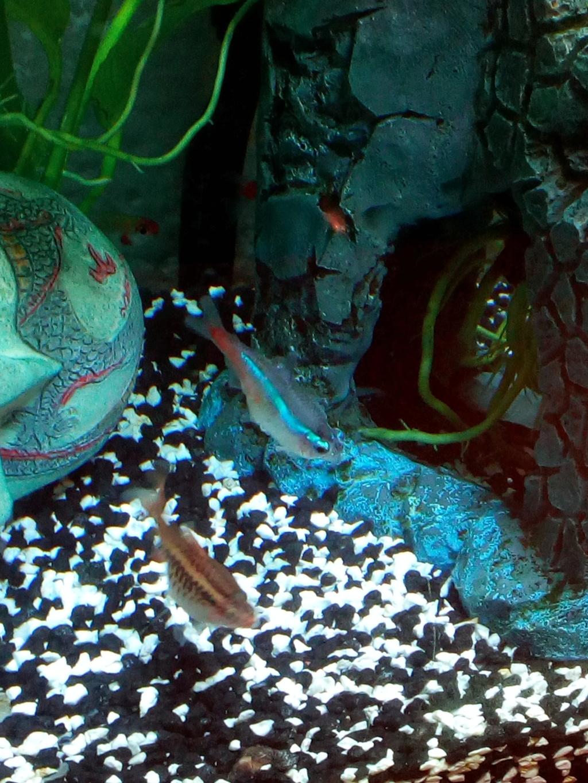 help poisson malade :( Img_2010