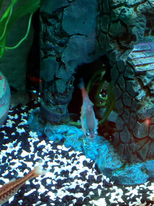 help poisson malade :( Img_2011