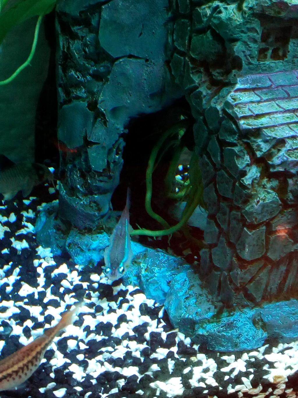 help poisson malade :( Img_2012
