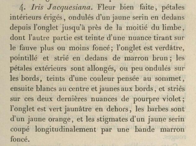 Iris 'Jacquesiana' - Jean-Nicolas Lémon 1840 - Page 2 1841-410