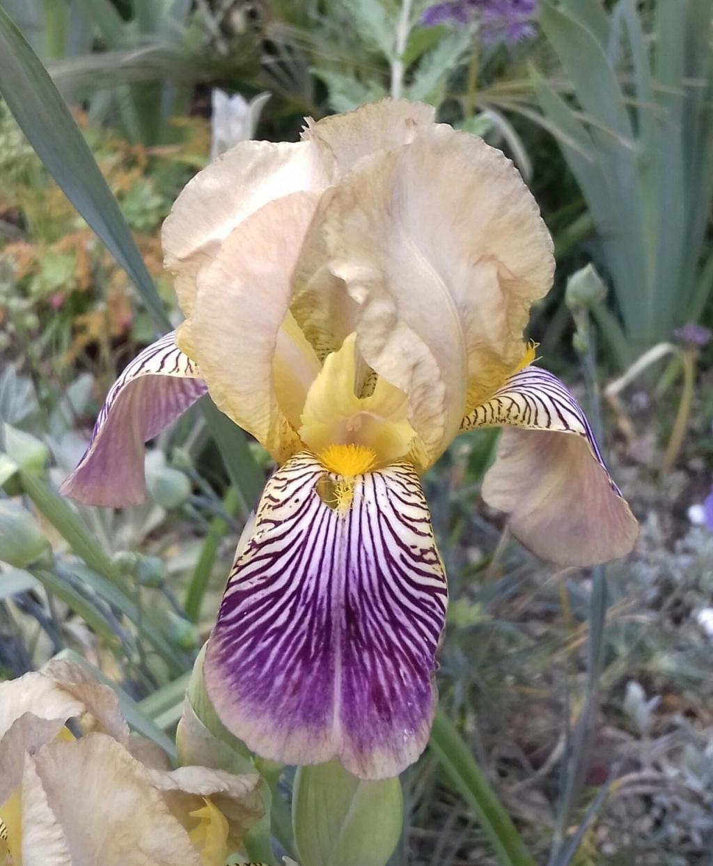 Les autres iris squalens 20200548