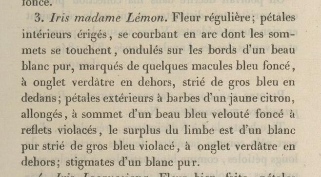Lémon - iris Victorine ou Mme Lémon ? Annale13