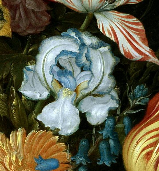 Iris plicata en peinture Bossch10
