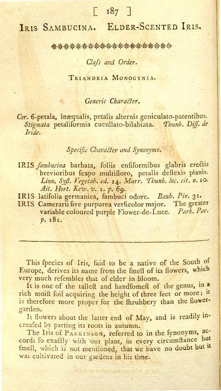 SAMBUCINA II : iris germanica n°8 et iris Camerarii Curtis15
