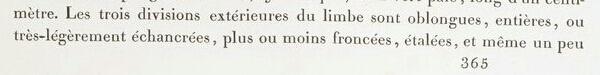 Iris squalens Les_li18