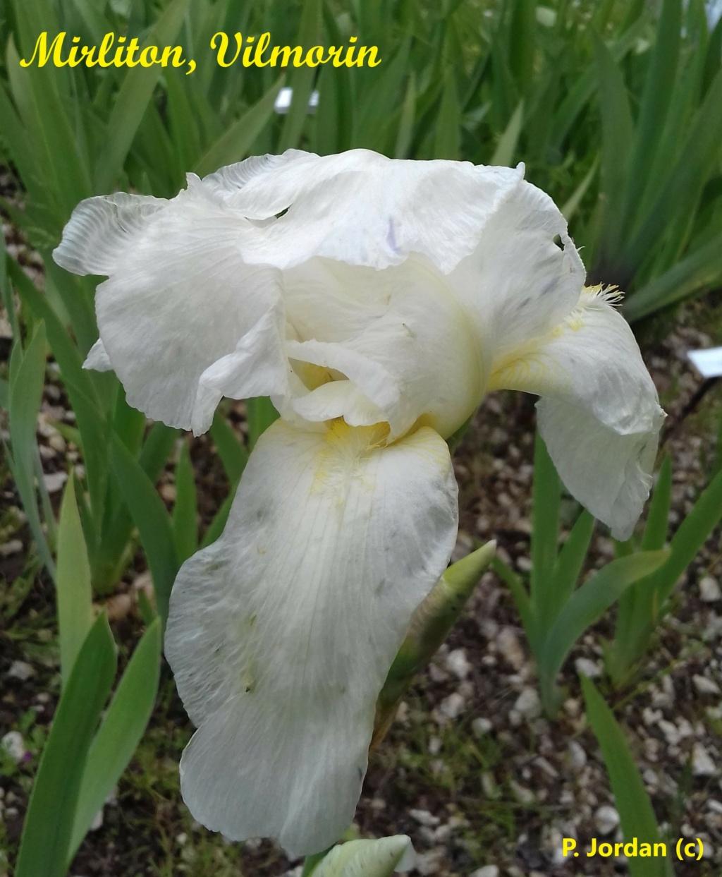 Les iris inédits : diploïdes horticoles français  Mirlit10