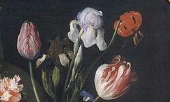 Les Iris plicata - une longue histoire et un bel exemple d'évolution - Page 2 Segher12