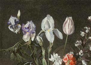 Iris plicata en peinture Segher14