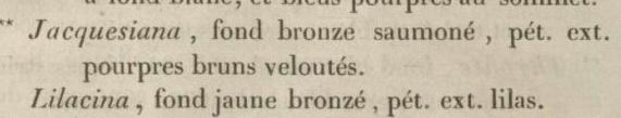 Iris 'Jacquesiana' - Jean-Nicolas Lémon 1840 - Page 2 Sept_111