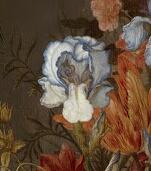Iris plicata en peinture Van_de10