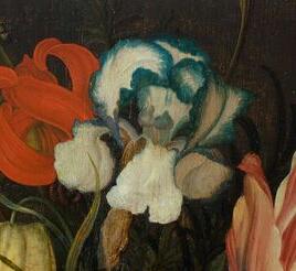 Iris plicata en peinture Van_de11