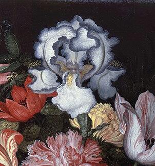 Iris plicata en peinture Van_de12