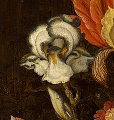Iris plicata en peinture Van_de13