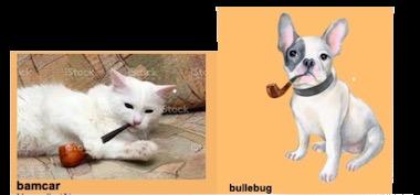 Bonjour de la part de bullebug - Page 2 Image12
