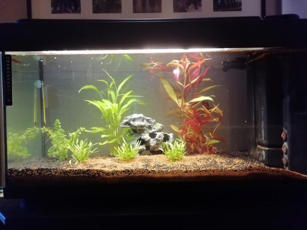 éclairage aquarium débutant Img_2017