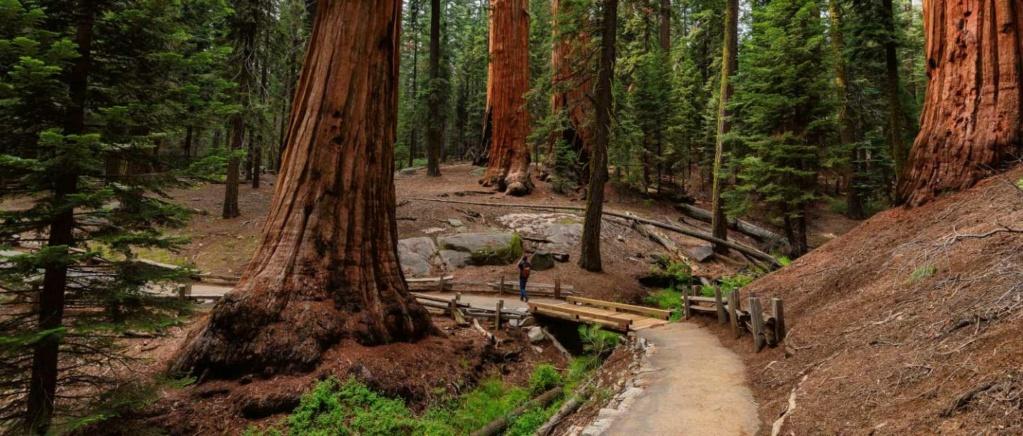 Sequoia National Park Sequoi10