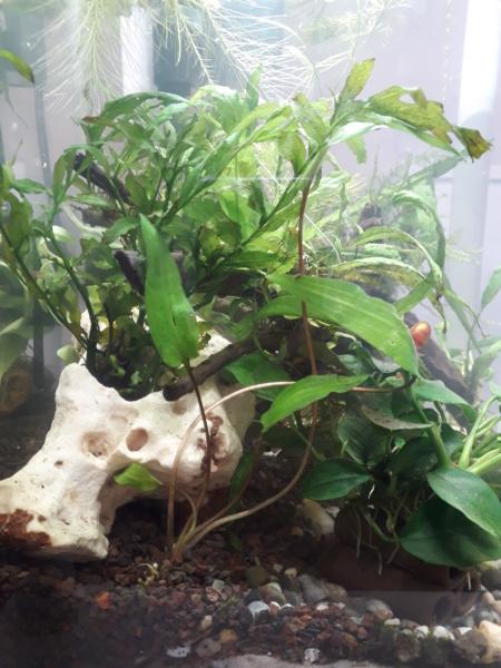 renaissance de mes aquarium 20_lit14