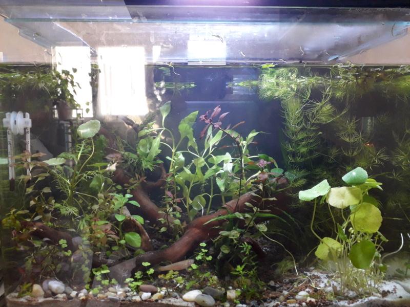 renaissance de mes aquarium 30_l_n10