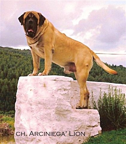 Arciniega s Lion of Bredwardine Arcini10