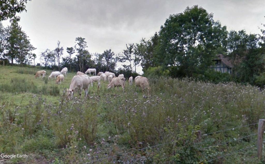 Les villages qui ont donné leur nom à un fromage (sujet touristique !) Cach10