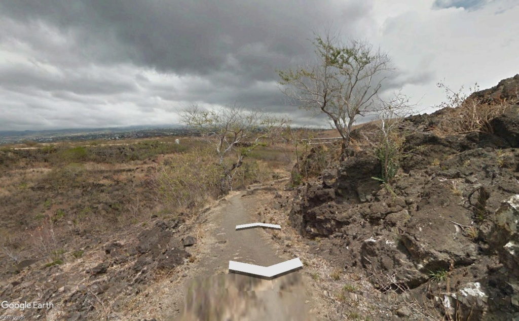 Végétation de la Réunion Cap_la15